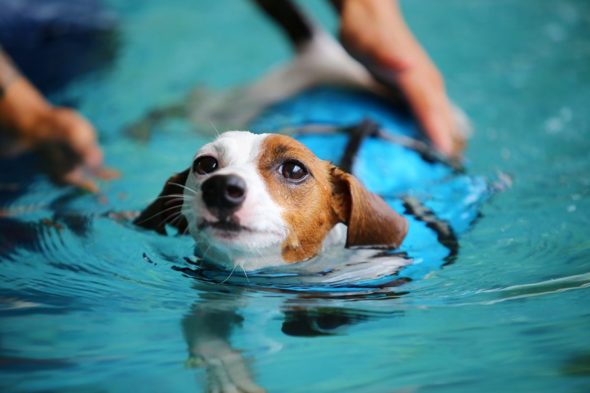 Canine Hydrotherapy Yorkshire Canine Therapy Centre