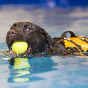 Canine Hydrotherapy at Yorkshire Canine Therapy Centre