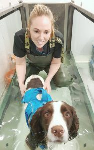 Canine Hydrotherapy Treadmill Yorkshire