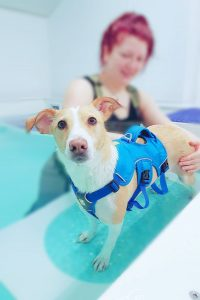 Canine Hydrotherapy Pool Doncaster, Goole, Howden, Selby, Yorkshire